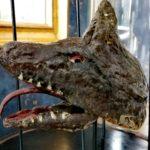 Têtes marionnettes en papier mâché sous globe Napoléon III - esprit brocante Hermin